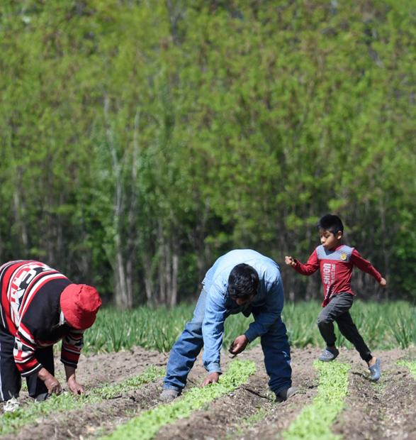 Trayectoria socio-técnica del sistema tecnológico feria de la agricultura familiar en la provincia del Neuquén