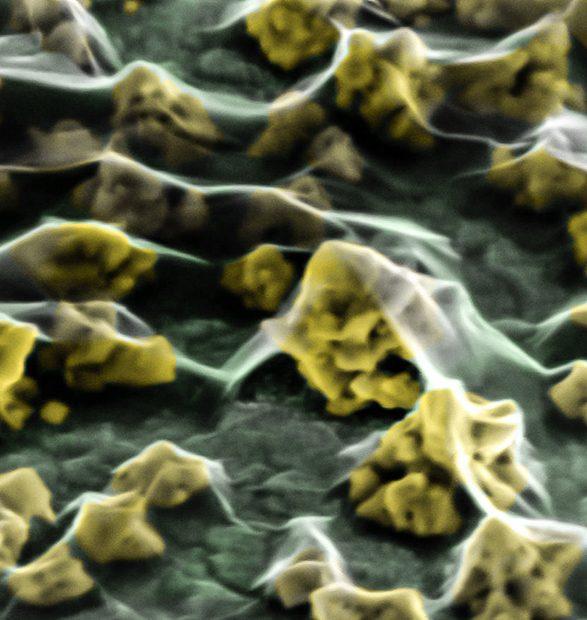 Los nanoconstructos biohíbridos con direccionamiento celular específico para futuras aplicaciones en diagnóstico in vivo y tratamiento del cáncer