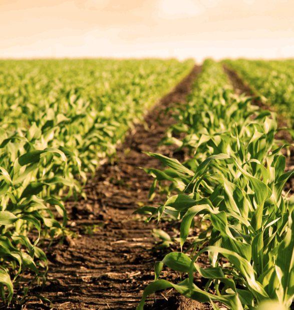 De productores, consumidores y mediadores: El desarrollo antropológico de un mercado territorial de hortalizas en AMBA norte
