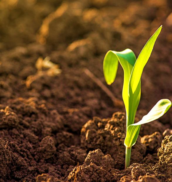 El manejo agrícola como herramienta clave para una agricultura de conservación. Su análisis desde la bioquímica y la microbiología del suelo.